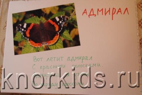 P5145211 500x333 Мир в альбошке Бабочки