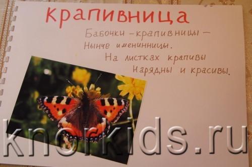 P5145212 500x333 Мир в альбошке Бабочки