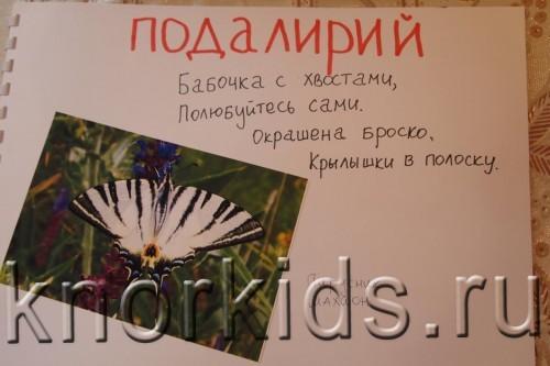 P5145214 500x333 Мир в альбошке Бабочки