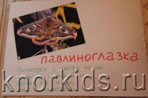P5145215 500x333 Мир в альбошке Бабочки