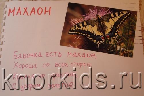 P5145216 500x333 Мир в альбошке Бабочки